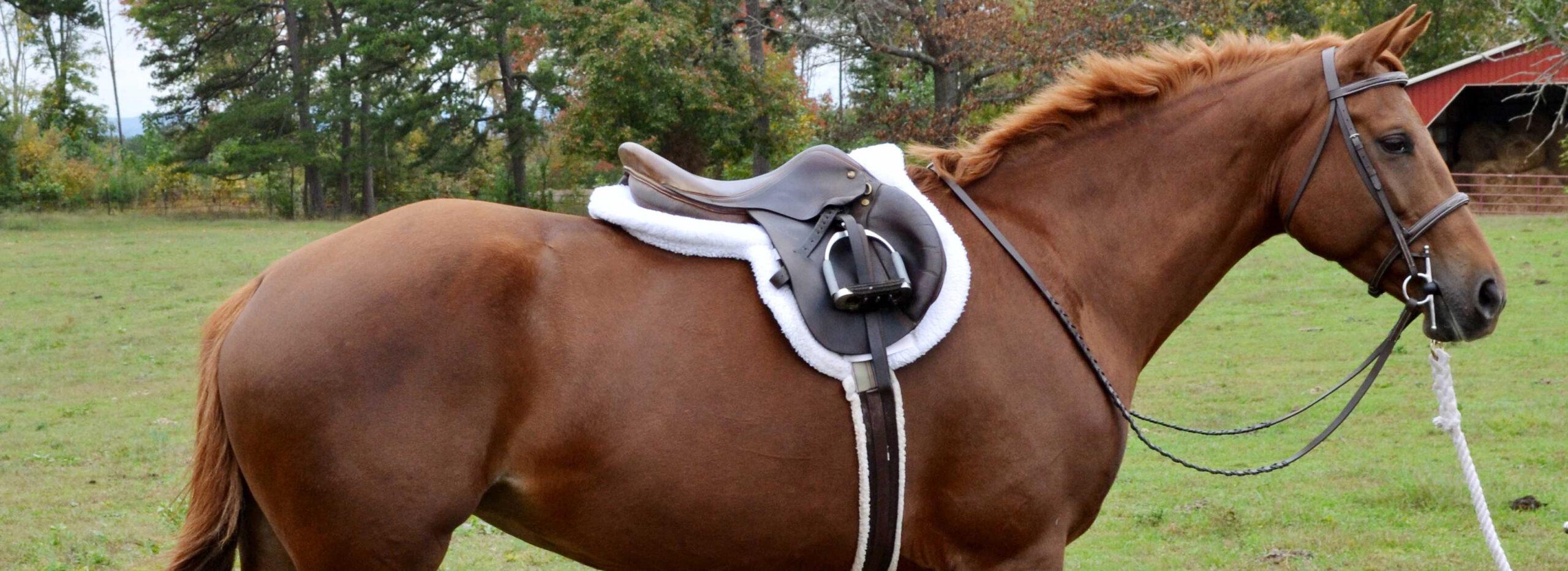 6 Evanna Hunter Saddle_cropped